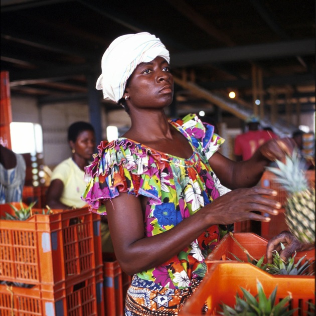 Pineapples in West Africa are destined for European markets